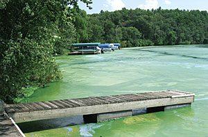 Fox Lake at Peak Algae
