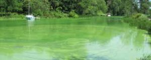 Tainter Lake Algae Bloom