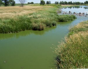 Milwaukee River Algae Bloom