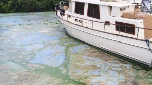 STuarts_FL-Docks_Algae