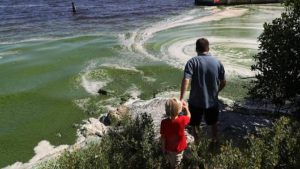 Stuart FL Algae Bloom