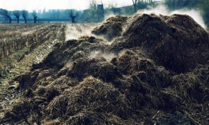 Animal Manure On The Farm