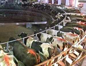 CAFO operation - Kewaunee County, WI
